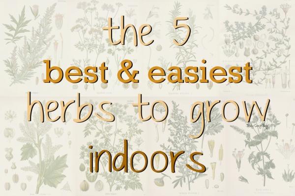 5-Best-Easiest-Herbs-To-Grow-Indoors
